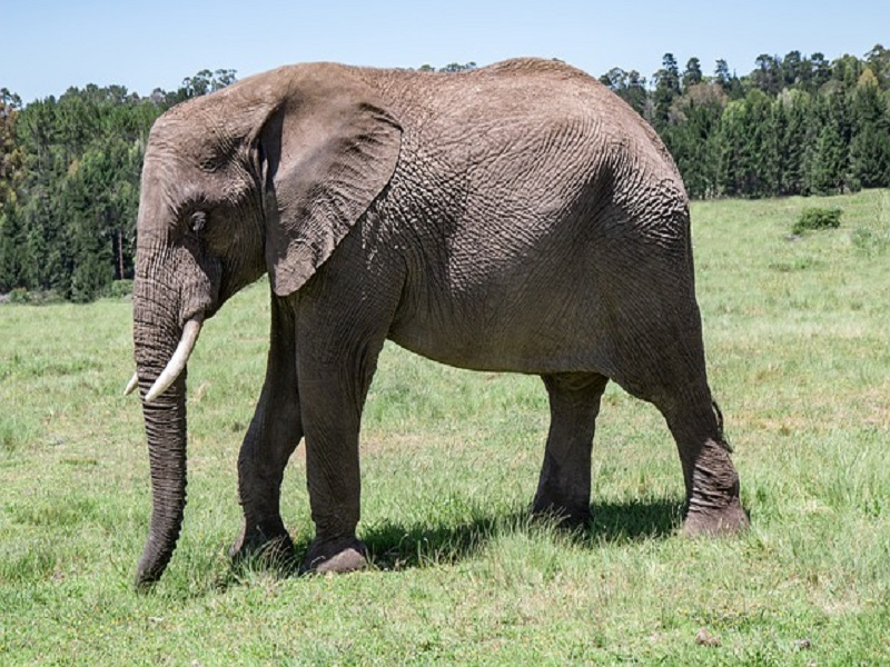 The court demands the government to problem NOC for elephant import