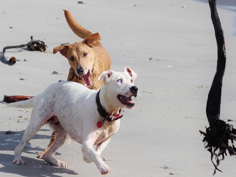 اینٹی رائیوز ویکسین پر حدوں کے دوران کتے کے کاٹنے والے کیس بڑھتے ہیں