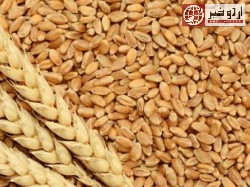 گندم کے خوفناک بحران کی اطلاع دے دی گئی