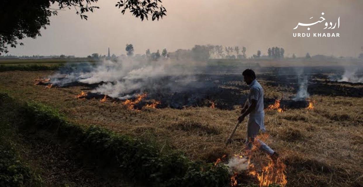 وزیراعلیٰ بزدار نے پنجاب میں فضائی آلودگی سے نمٹنے کے لئے تین نئے پارکوں کی منظوری دے دی