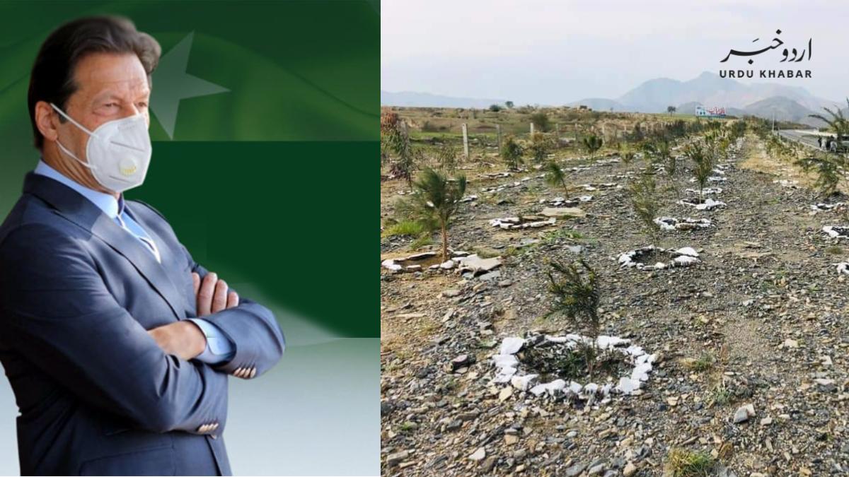 عمران خان نوشہرہ میں درخت لگاؤ مہم کا آج آغاز کریں گے