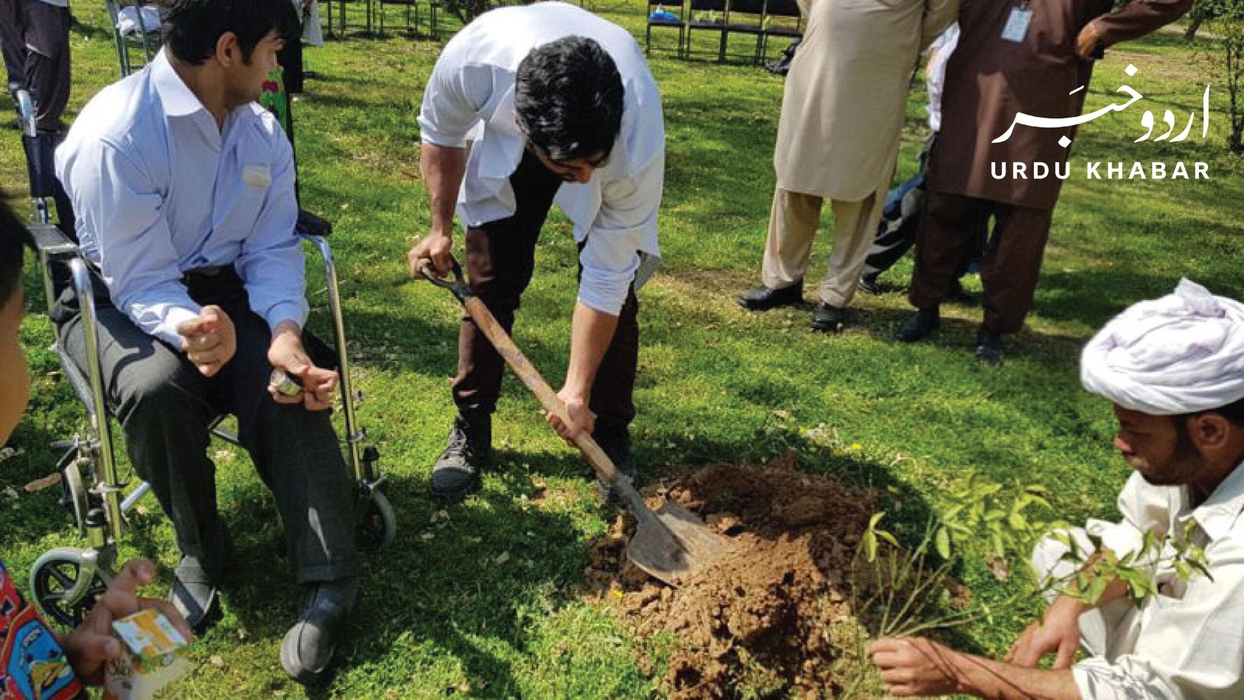 پاکستان نے ایک منٹ میں 50 ہزار پودے لگا کر نیا ورلڈ ریکارڈ قائم کر دیا