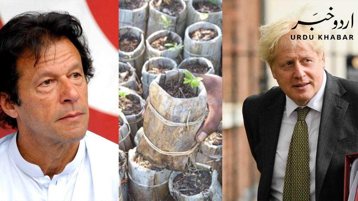 برطانوی وزیر اعظم کی عمران خان کے دس ارب درخت پراجیکٹ کی تعریف